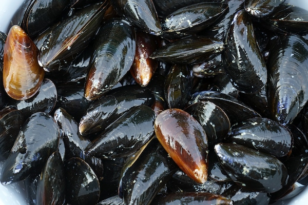 Closeup of a pile of fresh raw mussels